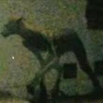 【驚愕】人間が動物に変身したUMA「アスワング」が目撃される!