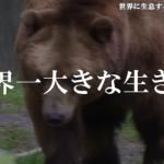【驚愕】世界に生息する大きな生き物 8選